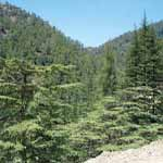 Cyprus_holidays_in_Troodos_mountain_tour