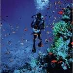 holidays_in_Sharm_el_sheikh_snorkelling