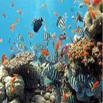 Maldives_Diving_tour_holidays_from_cyprus