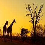 South_Africa_Kruger
